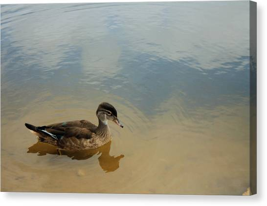 Ducky Two Canvas Print