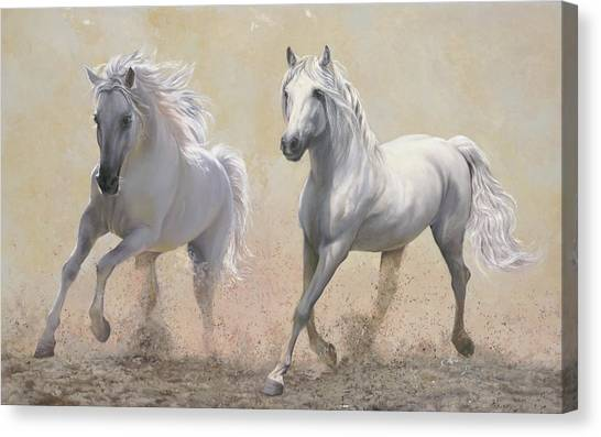 White Horse Canvas Print - Due Cavalli by Guido Borelli