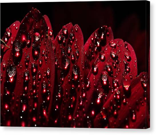 Due To The Dew Canvas Print