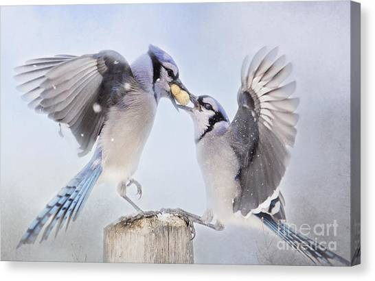 Dueling Jays Canvas Print