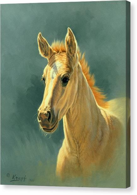 Dun Colt Portrait Canvas Print by Paul Krapf