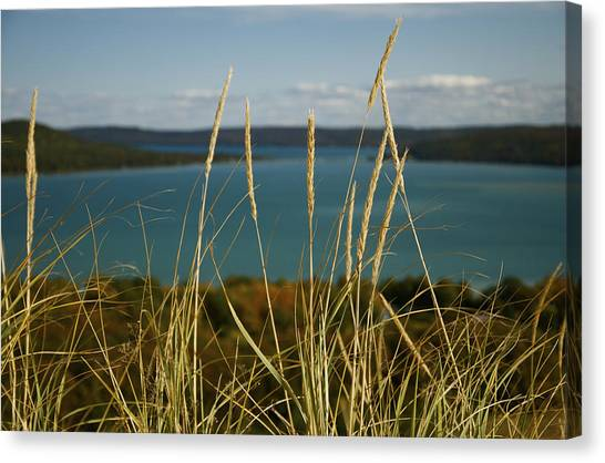Dune Grass On A Sunny Fall Day Canvas Print