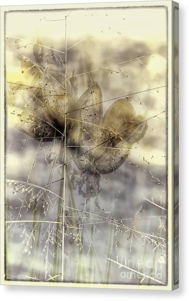 Dune Grass On Yucca Canvas Print