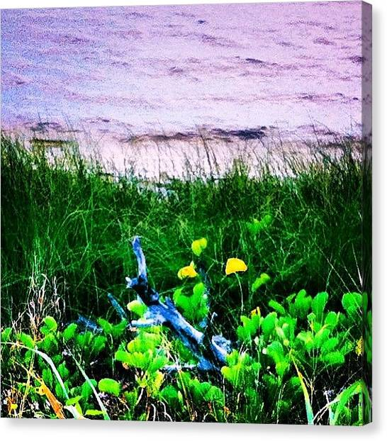 Seagrass Canvas Print - Dune Grasses And #driftwood Along The by Michelle Huey