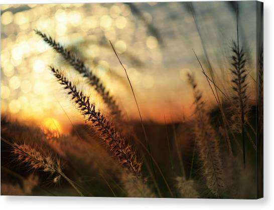 Seagrass Canvas Print - Dune by Laura Fasulo