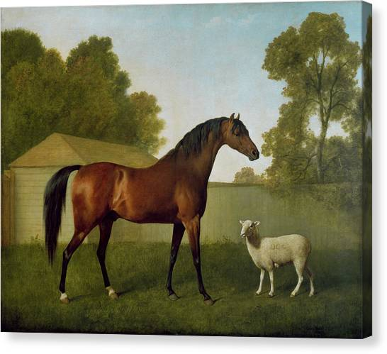 Race Horses Canvas Print - Dungannon, The Property Of Colonel Okelly, Painted In A Paddock With A Sheep, 1793 by George Stubbs