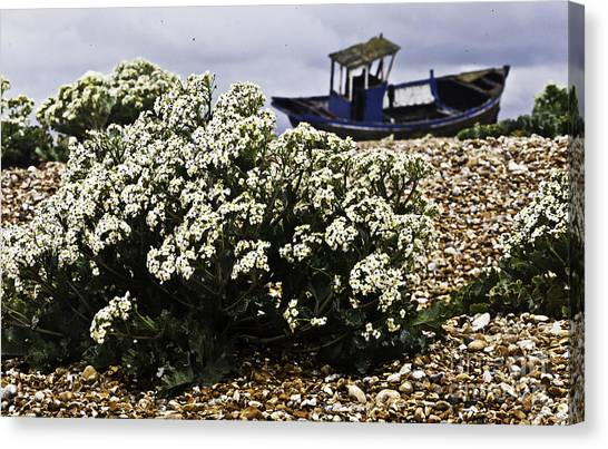 Dungeness Seascape Canvas Print by Lesley Rigg