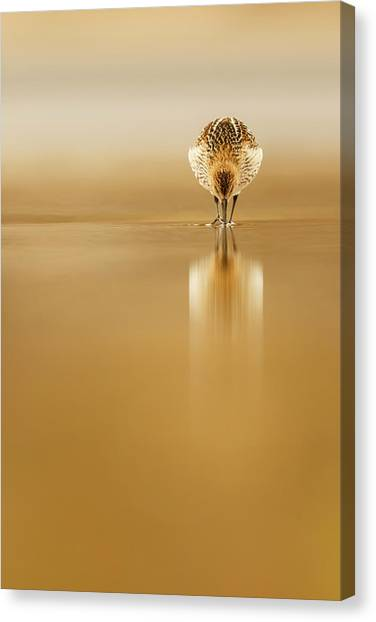 Mirror Canvas Print - Dunlin Reflection by Mario Su?rez