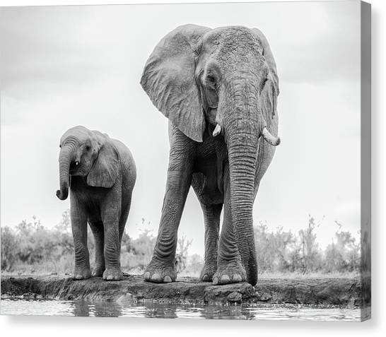 Africa Wildlife Canvas Print - Duo by Jaco Marx