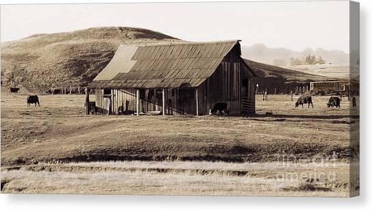 Durham California Barn Canvas Print