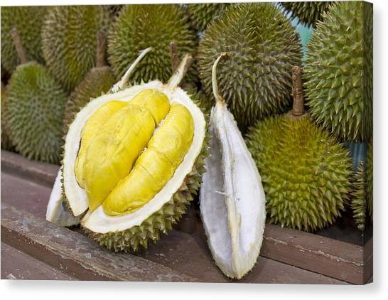 Durian 2 Canvas Print