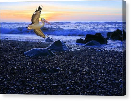 Dusk Flight Of The Pelican Canvas Print