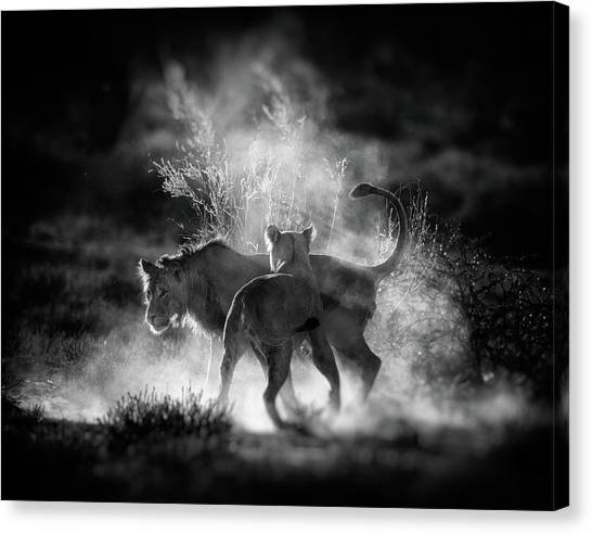 Dust Canvas Print by Jaco Marx