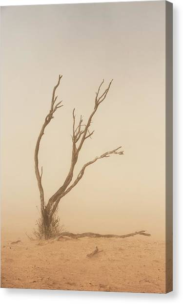 Kalahari Desert Canvas Print - Dust Storm In The Auob Riverbed by Tony Camacho