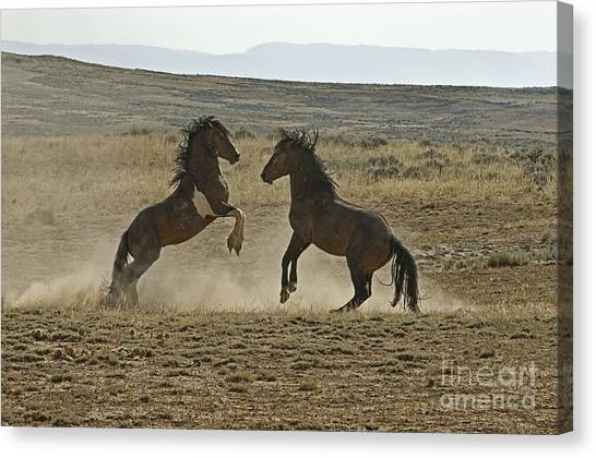 Dust Up At Mccullogh Peaks Canvas Print by Bob Dowling