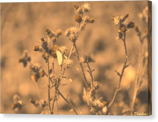 Dusty Desert  Canvas Print