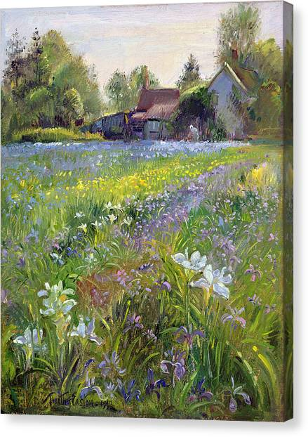 Spring Trees Canvas Print - Dwarf Irises And Cottage by Timothy Easton