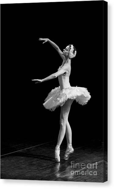 Dying Swan 8. Canvas Print