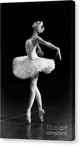 Dying Swan I. Canvas Print
