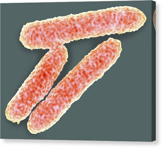 E. Coli Bacteria Canvas Print by Science Photo Library