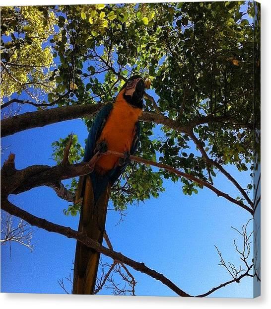 Tropical Birds Canvas Print - E Pelo Caminho... #natureza by Bruno Leo