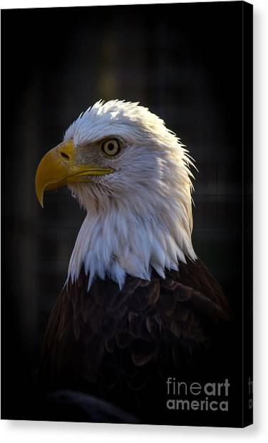 Eagle 1 Canvas Print