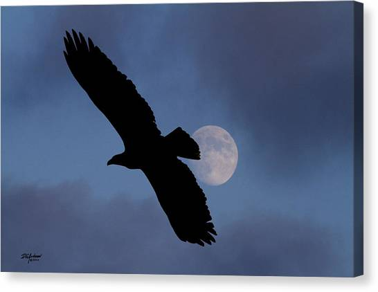 Minnesota Wild Canvas Print - Eagle After Sundown by Don Anderson