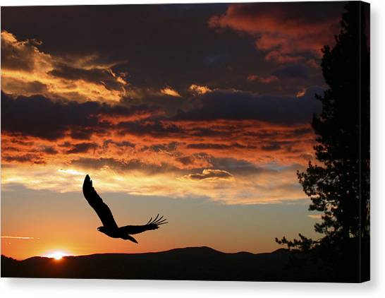 Carnivore Canvas Print - Eagle At Sunset by Shane Bechler