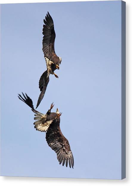 Eagle Ballet Canvas Print