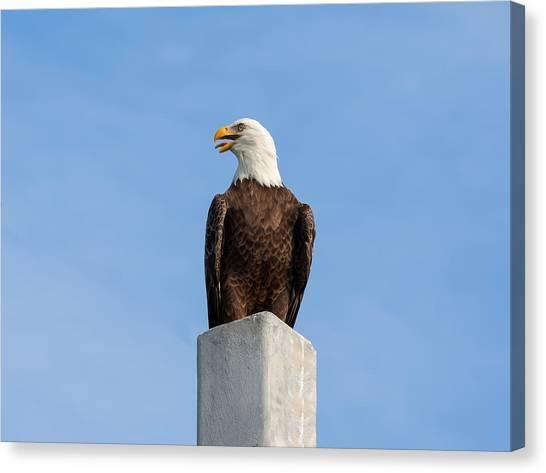 Coexist Canvas Print - Eagle Cry 2 by John M Bailey