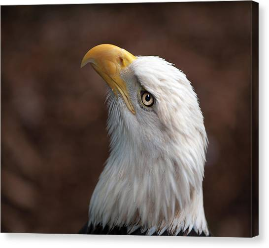 Eagle Eye Canvas Print by Tammy Smith