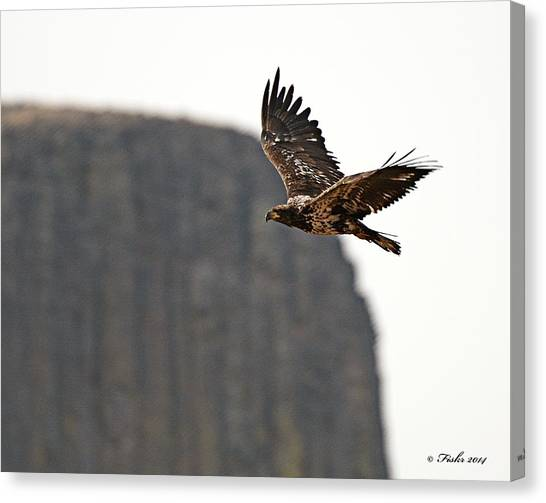 Eagle Flyby Canvas Print