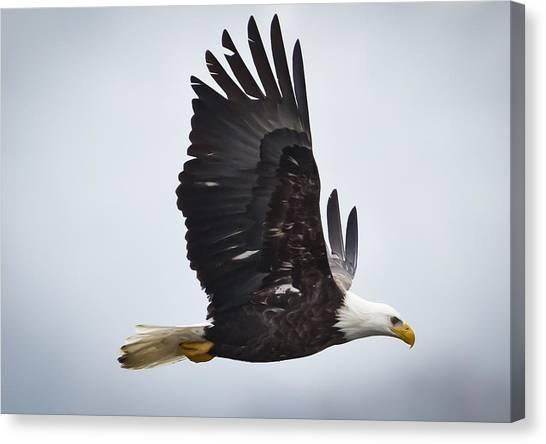 Eagle In Flight Canvas Print by Ricky L Jones