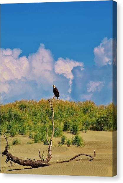 Eagle On Watch Canvas Print