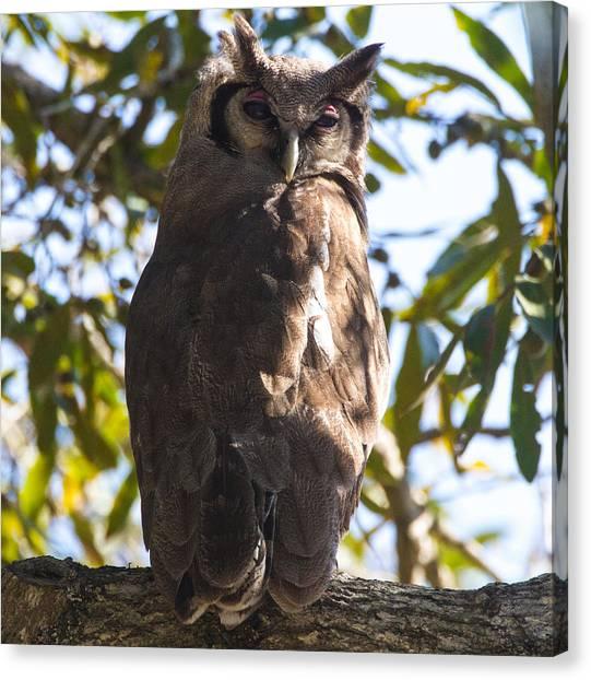 Eagle Owl Canvas Print by Craig Brown