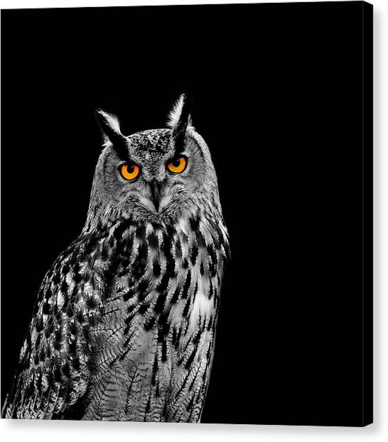 Owls Canvas Print - Eagle Owl by Mark Rogan