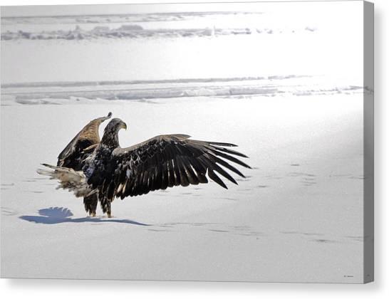 Eagle Prayer Canvas Print by RJ Martens
