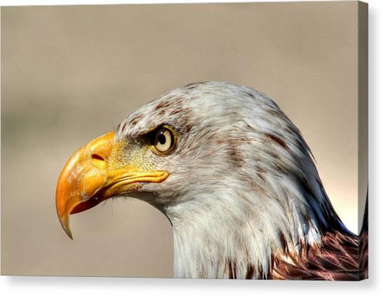Eagle Profile Canvas Print