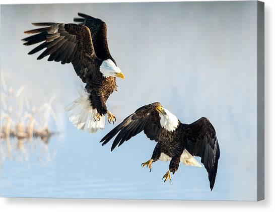 Eagle Showdown Canvas Print