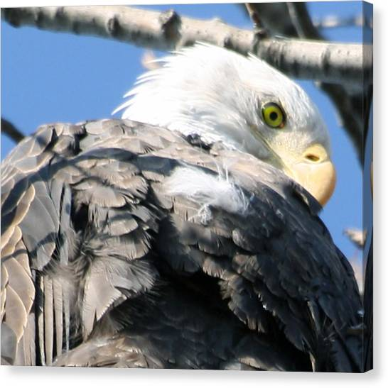 Eagle Canvas Print by Valerie Wolf