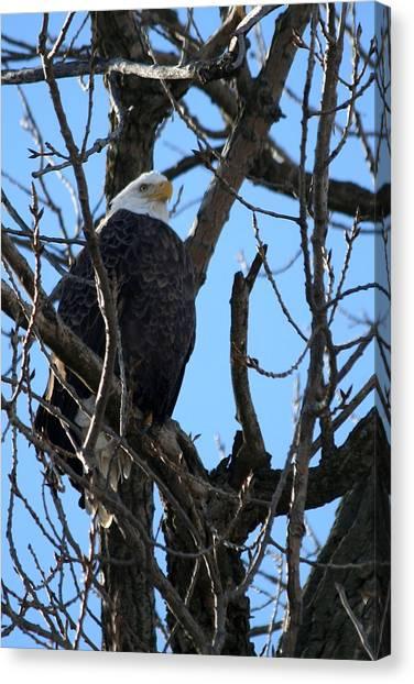 Eagle Watch Canvas Print by Laurel Gillespie
