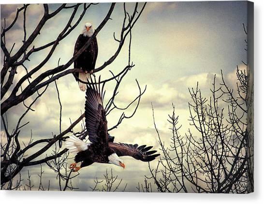 Eagle Watching Eagle Canvas Print
