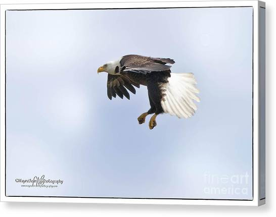 Eaglelanding Approach Canvas Print by Wayne Bennett