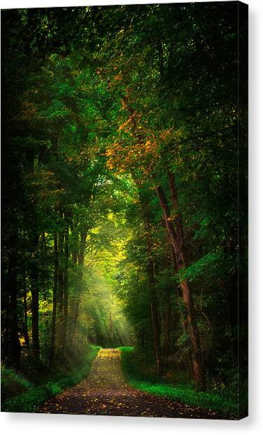 Roadway Canvas Print - Early  Mist  by Emmanuel Panagiotakis