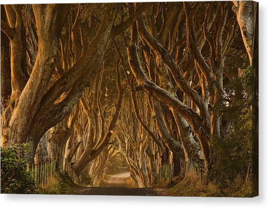 Early Morning Dark Hedges Canvas Print by Derek Smyth