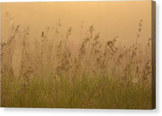 Early Morning Field Canvas Print