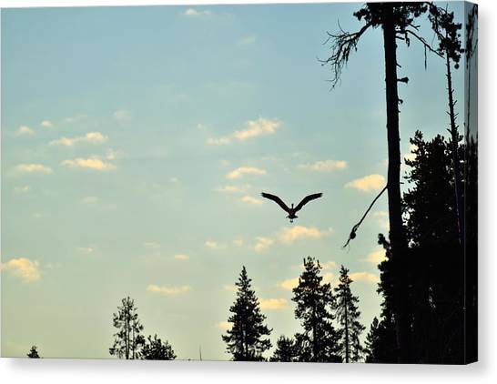Early Morning Heron In Silhouette Canvas Print by Rich Rauenzahn