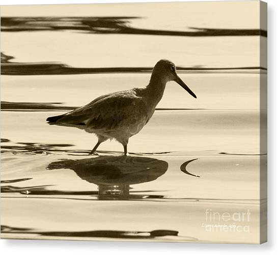 Early Morning In The Moss Landing Harbor Picture Of A Willet Canvas Print