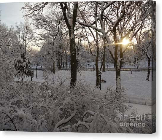 Early Morning Sun In Central Park.  Canvas Print