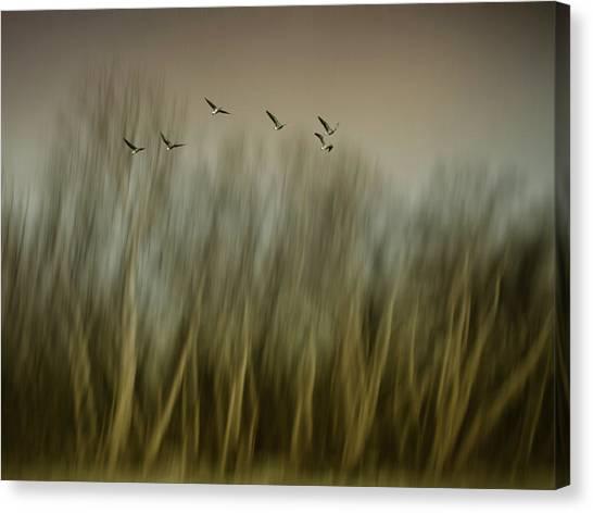 Geese Canvas Print - Early Spring Vision... by Yvette Depaepe